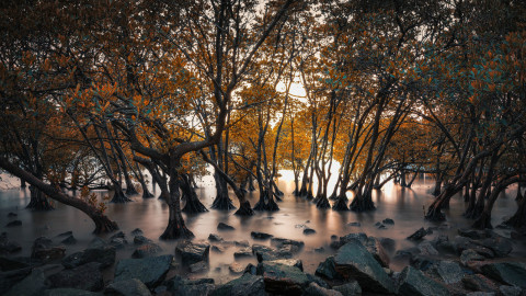 深圳不光有經濟,她的自然美,你看過沒有?