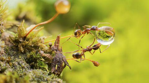 【文化漫談】所謂驚蟄,蟲子非為春雷驚倒,而是另有原因?