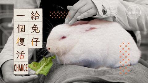 【夢生活】做義工不是陪兔仔玩-兔協義工︰每日要清70個籠!