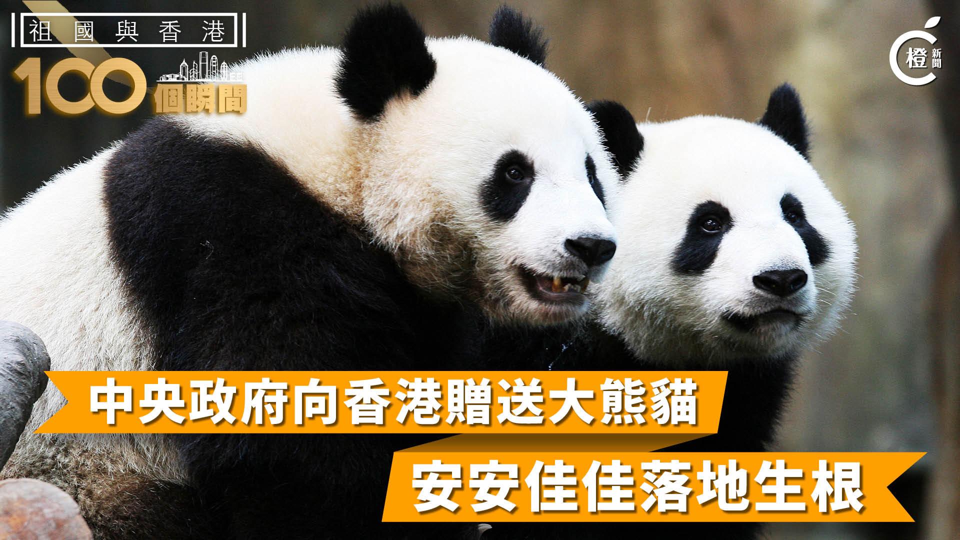 【祖國與香港100個瞬間】中央向香港贈送大熊貓 安安佳佳落地生根
