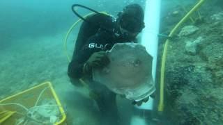 新加坡海域的兩艘沉船撈出九噸文物 發現獨一無二的元代青花瓷瓶