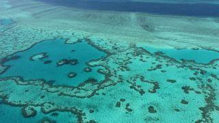 聯合國教科文組織建議將大堡礁列瀕危遺產 澳洲反對