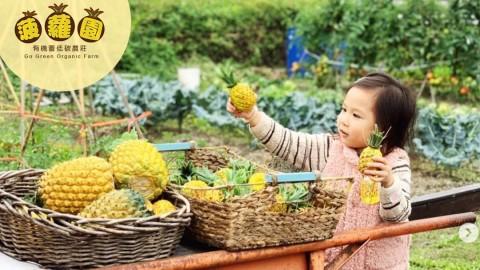 【好去處】元朗低碳農莊菠蘿園:親近大自然-與可愛羊駝互動