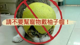 【中秋危機】獸醫再三叮囑:別幫寵物戴柚子帽!