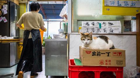 【愛貓影事】早餐常到笨蕉店