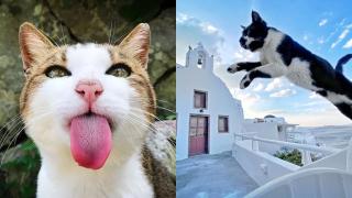 【周遊藝術】貓咪愛好者Erica Wu 用手機隨行隨拍下療癒的喵喵照片!
