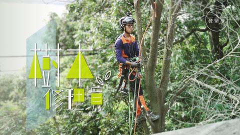 【夢專訪】斬很快但搬木頭逾句鐘 28歲攀樹師:畏高是必須