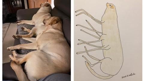 【周遊藝術】Phil-Heckels筆下的趣怪寵物肖像-為露宿者救濟組織籌集資金