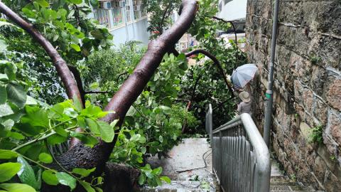 【來論】由颱風襲港看抗疫責任及自由