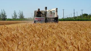 內地今年糧產量有望再創新高 連續七年保持1.3萬億斤以上