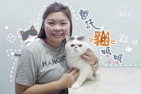 【夢專訪】養貓修補家庭關係 寄養人:讓貓統治人類吧!